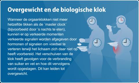 Overgewicht en de biologische klok