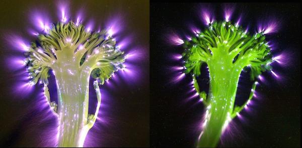 Broccoli energie