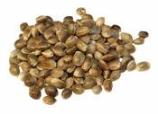 Raw Hemp Protein