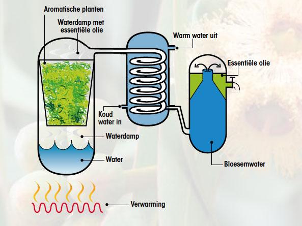Productie van essentiële oliën middels stoomdistillatie